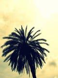 Palme in den modernen Farben Lizenzfreies Stockfoto