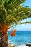 Palme an der Küste Stockbilder