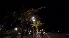 Palme in der Nachtstadt stock video