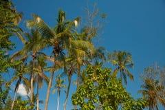Palme in der Sonne Stockfotografie