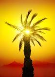 Palme in der Wüste Lizenzfreies Stockbild