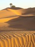 Palme in der Wüste Stockfotos