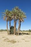Palme in deserto Fotografia Stock Libera da Diritti
