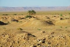 Palme in deserto Immagine Stock