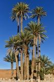 Palme in deserto del Sahara Marocco Fotografie Stock