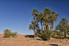 Palme in deserto Sahara, Marocco Fotografia Stock