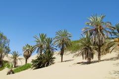 Palme in deserto tropicale Fotografia Stock Libera da Diritti