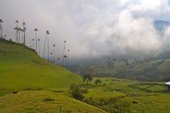 Palme di cera giganti, valle di Cocora, Colombia immagini stock
