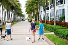 Palme di Miami e costruzione dell'hotel Fotografie Stock Libere da Diritti