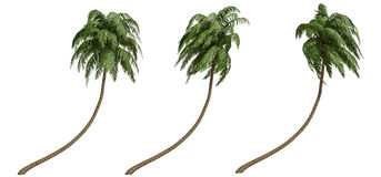 Palme di noce di cocco Immagine Stock Libera da Diritti