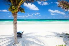 Palme di noce di cocco alla spiaggia Fotografia Stock Libera da Diritti