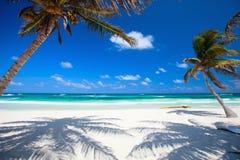 Palme di noce di cocco alla spiaggia Immagini Stock