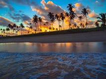 Palme di noce di cocco nel tramonto Fotografia Stock Libera da Diritti