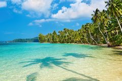 Palme di noce di cocco sulla spiaggia Fotografie Stock