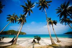 Palme di noce di cocco sulla spiaggia Fotografia Stock
