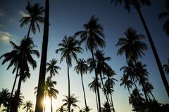 Palme di Sun di pomeriggio Immagini Stock Libere da Diritti