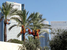Palme di Tel Aviv e grattacieli 2012 Fotografia Stock
