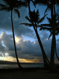 Palme di tramonto Fotografie Stock