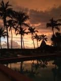 Palme di tramonto riflesse in uno stagno Fotografie Stock Libere da Diritti