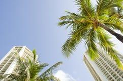 Palme di Waikiki Fotografia Stock Libera da Diritti