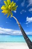 Palme, die über erstaunlicher blauer Lagune hängt Stockfotos