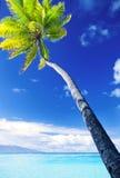 Palme, die über erstaunlicher blauer Lagune hängt Lizenzfreie Stockbilder
