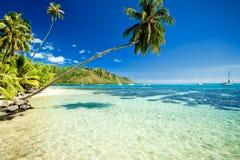 Palme, die über erstaunlicher Lagune hängt Lizenzfreie Stockfotos