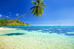 Palme, die über Lagune mit blauem Himmel hängt Stockbild