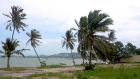 Palme, die im Wind durchbrennt stock video footage