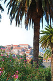Palme a Dubrovnik Fotografia Stock