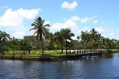 Palme durch Fluss Stockbild