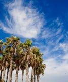 Palme e cielo fotografie stock