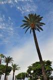 Palme e cielo a Cannes Fotografie Stock Libere da Diritti