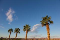 Palme e cielo del paesaggio del deserto Fotografie Stock Libere da Diritti