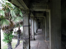 Palme e colonne in Angkor Wat Fotografia Stock Libera da Diritti