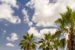 Palme e del cielo blu Fotografia Stock