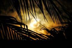 Palme e della luna Fotografia Stock Libera da Diritti