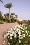 Palme e fiori Fotografie Stock