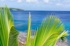 Palme e fronde tropicali di scena, oceano e cielo Immagine Stock