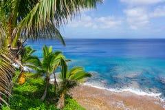 Palme e fronde tropicali di scena, oceano e cielo Immagini Stock