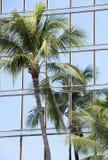 Palme e grattacieli Fotografie Stock