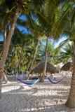 Palme e hammocks ad un ricorso Fotografia Stock Libera da Diritti