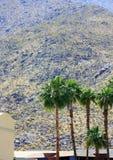 Palme e la montagna Fotografia Stock