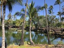 Palme e laguna in Hawai U.S.A. Immagine Stock Libera da Diritti