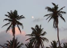 Palme e luna sul cielo con il tramonto delle nuvole Immagine Stock