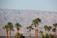 Palme e montagna del deserto Fotografia Stock Libera da Diritti
