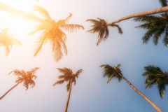 Palme e sole giallo in un cielo fotografia stock libera da diritti