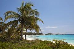Palme e spiaggia - baia del faro Fotografia Stock Libera da Diritti