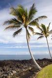 Palme e spiaggia hawaiane Immagine Stock