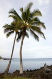 Palme e spiaggia hawaiane Fotografia Stock